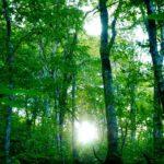 光の道と樹木の物語(エクスペアリヒーラー伝授)